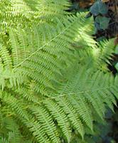 Organic Plant Leaf